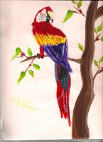 A Parrot by hollyluvsarty
