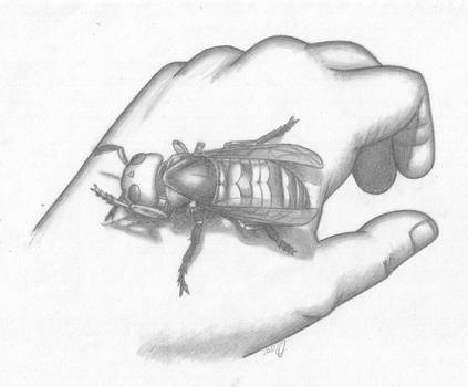 Second place Japanese Hornet by Keeper-of-souls