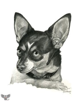 Chihuahua Drawing by ART-fromthe-HEART