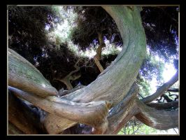 Ancient Tree by nuvem