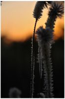 desert-flowers-at-dawn by pathworking