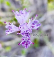 Thyme by hatesymphony