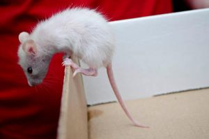 Neglected Baby Rat (2) by Cinestress