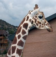 Cheyenne Mtn Zoo 16 by Falln-Stock