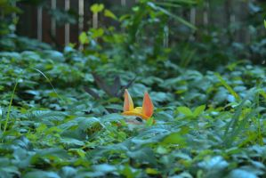 I think I saw a Pokemon in those shrubs by GiraffeRave