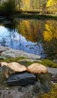 Beaver pond and mushrooms by mirengraphics
