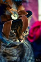 Steampunk Cat Nr. 1 (Killian) by cloud-dark1470