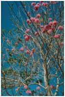Flowers in the sky by earthly-muse