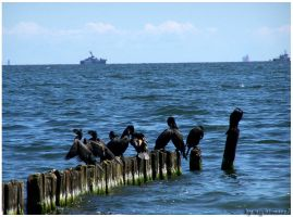 Cormorants by nightmare7