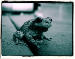 Frog Two by RisikaMadden