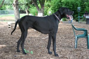 great dane 20 by jettstock