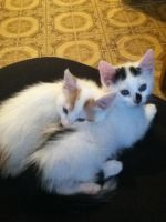 Baby Kuroi and Sylvester by TheDragonInTheCenter