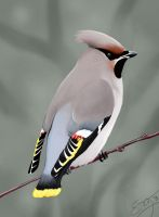 Bohemian Waxwing by Roaben