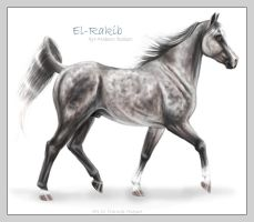 KhC El-Rakib - Deceased by sealle