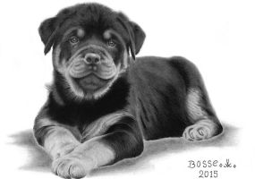 Rottweiler Puppy 3 by Torsk1