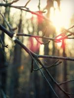 Branches by SimpleWay
