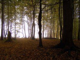 in a vicious forest by gucspeed