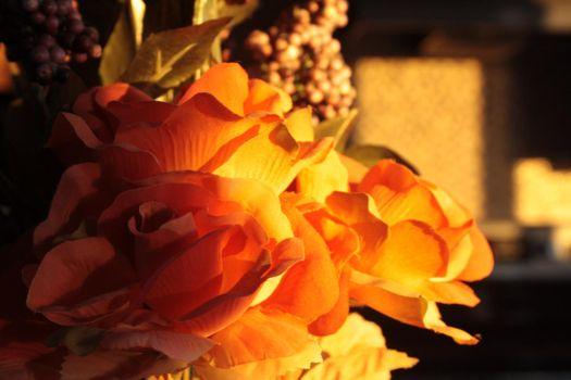 Sunset's Rose by ayin15251