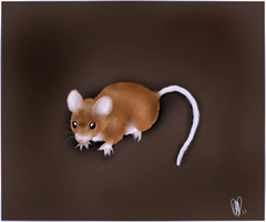 Squeak the mouse by Mirera