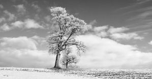Tree in Winter, Kilrea, Northern Ireland by younghappy