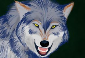 Wolf Painting by dragonisss