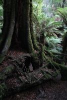 A Tree's Age by FreeakStock