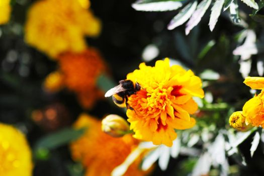 Flower with a Bee by ruslanriad