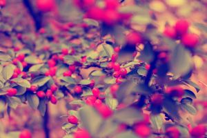 Autumn berries by 86Botond