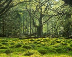 Woodland by scotto