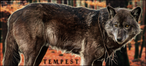 tempest by Sigath