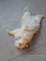 Cat Rolling Over by Kumiko-Art