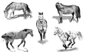 Horse Gestures - Daily Practice by Olooriel