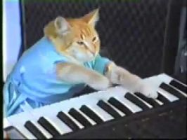 keyboard cat by Monsterofthesea