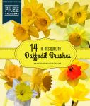 14 Cheerful Daffodil Flower Brushes by fiftyfivepixels