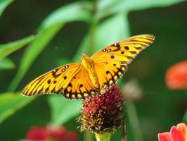 Butterfly series 2 by GramMoo