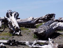 Giant Driftwood Stock by Stoked-Stock