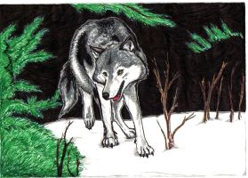 Wolf? by LuezA-35