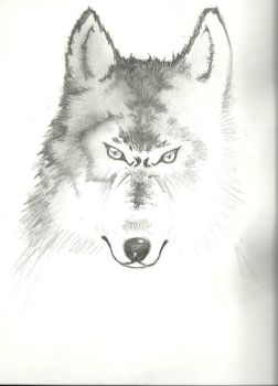 WIP wolf by SoraTwinblade