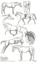 more horse studies by kalambo