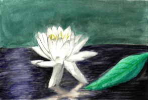 Water Lily by kittyblack13