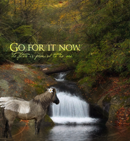 Go For It by Camalla