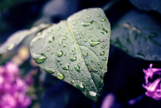 dew drops by SufferSome