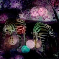 Zany Zebras by Cattereia