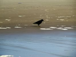 Crow 5 -- Sept 2009 by pricecw-stock