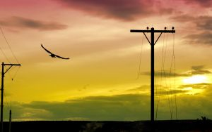 flying at dusk by abomontage