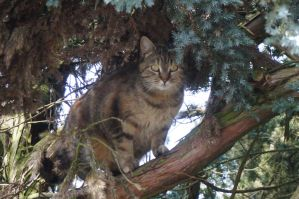 Cat in a tree by Mecarion
