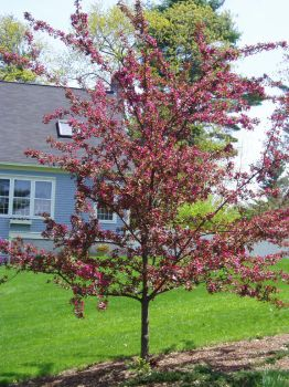 My Uncles Beautiful Tree by lilly-peacecraft