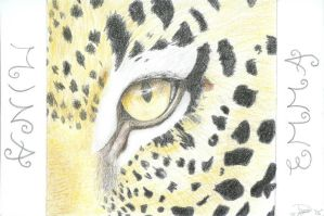 Leopard-Colour by arwenpotter