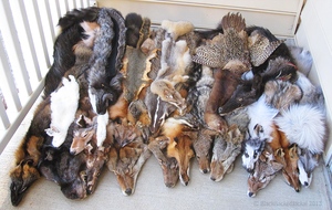 Pelt Group 001 by BlackBackedJackal
