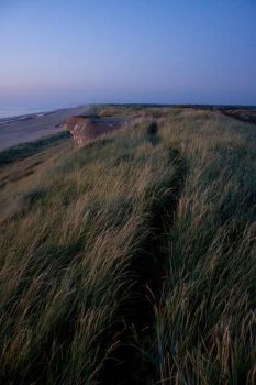 A path in the dunes by MatthijsM